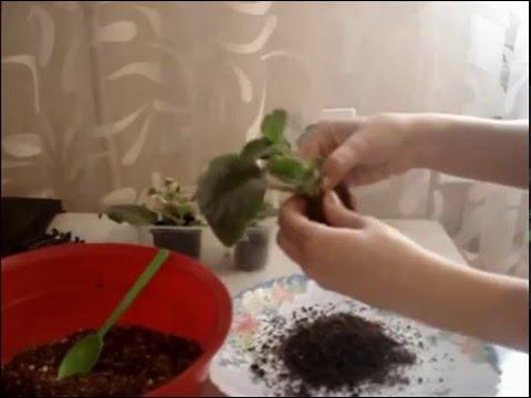 Детки фаленопсиса, фото Как отделить, отсадить и