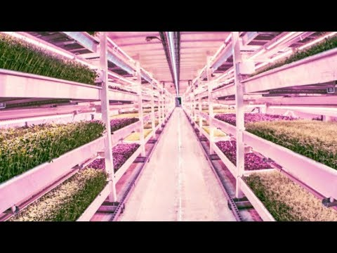 Sustainable Farming In London | Good Housekeeping UK
