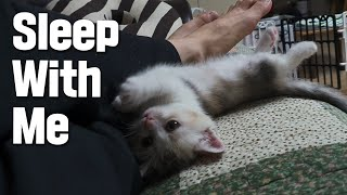 Download Baby Kitten Can Only Sleep if She Comes Next to Me