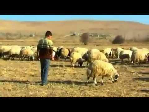 Azadi  Şevin  Müzik  İzle  Netd