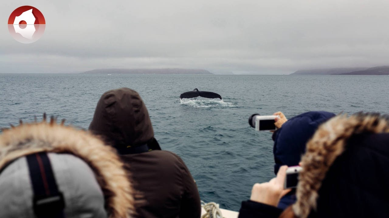 whale watching Whale watching tours and wildlife cruises with san juan excursions from friday harbor on san juan island in washington state.