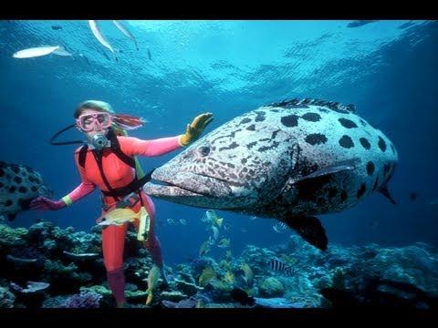 La grande barrière de corail - Australie