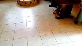 Olden és Baby Játék- German Shepherd Vs Yorkshire Terrier  :d