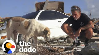 Guy Uses Drones To Rescue Animals From Disasters | The Dodo Heroes