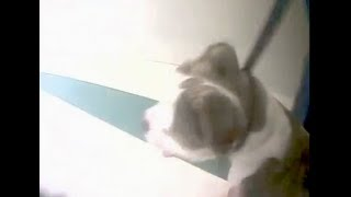 Police footage of dog at Fillmore Elementary