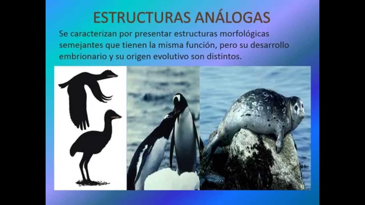 ANATOMÍA COMPARADA ( CLAUDIA LANDIN ) - YouTube