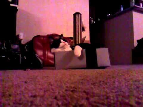 Lazy box cat