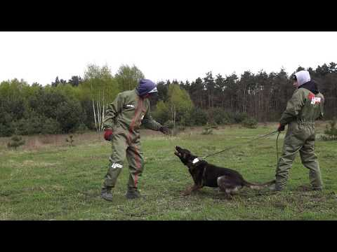 borys-dutch-shepherd-hunt-drive-inside-and-outside