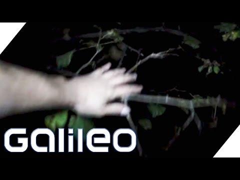 Eine Nacht Im Gruseligsten Wald Der Welt - Hoia Baciu | Galileo | ProSieben