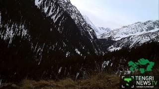 Снежный барс попробовал на вкус камеру в горах Джунгарского Алатау