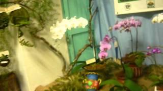 Feria Flor del Espíritu Santo- Exposición de orquideas