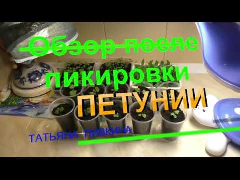 Как вырастить арбуз - скороспелые сорта, рецепты из арбуза