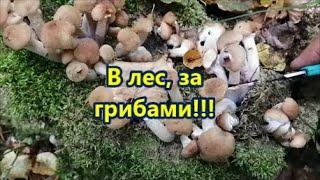 В лес, за грибами!!!
