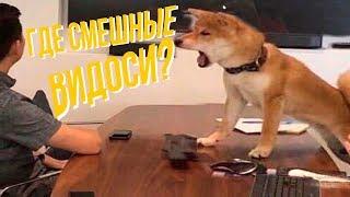 Я РЖАЛ ПОЛЧАСА. Смешные Коты и Собаки. ПРИКОЛЫ С ЖИВОТНЫМИ 3.0