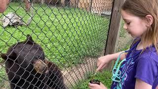 Faith feeds a bear honey for her 10th birthday