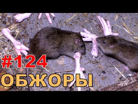 """#124. Реалити Шоу """"ALCARATZ"""". ДОМ 2 - Крысы. Обжоры"""