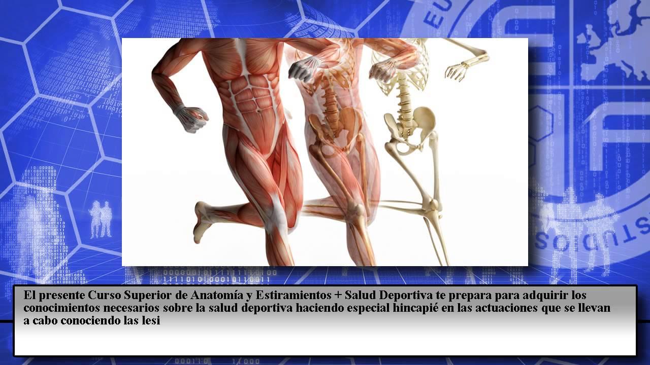 Curso Superior Anatomia Estiramientos Salud Deportiva - Cursos ...
