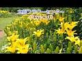2010.6.13 フラワーセンター大船植物園 の動画、YouTube動画。
