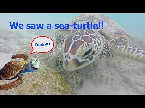 Surfing, Sea-Turtles, and Scenic Drives l Travel Vlog Day 2