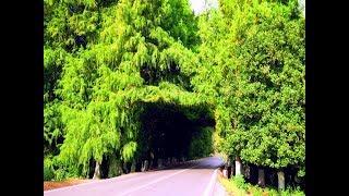 la nature merveilleuse de la zone touristique Tonga dans la wilaya d'El Tarf