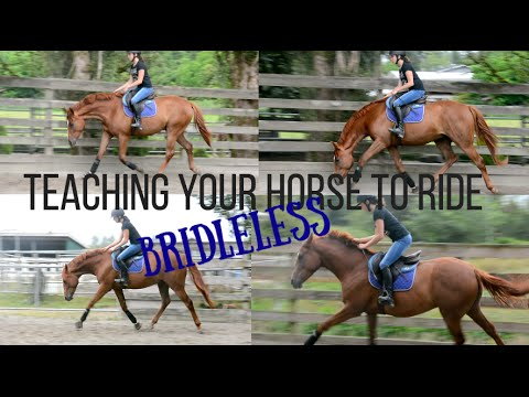Teaching Your Horse to Ride BRIDLELESS