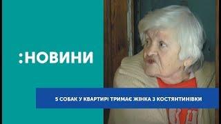 П`ятьох собак у квартирі тримає пенсіонерка з Костянтинівки