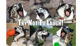 Try Not To Laugh Challenge! July 2018