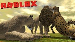 Territory Dispute Lions vs Cheetah/Leopard, African lion!   ROBLOX (Wild Savannah)   (PT/BR)