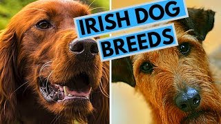 Best Irish Dog Names