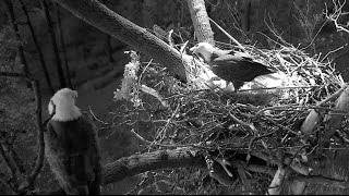 DC Eagle Cam - Mr. President & The First Lady Get Ready for New Year