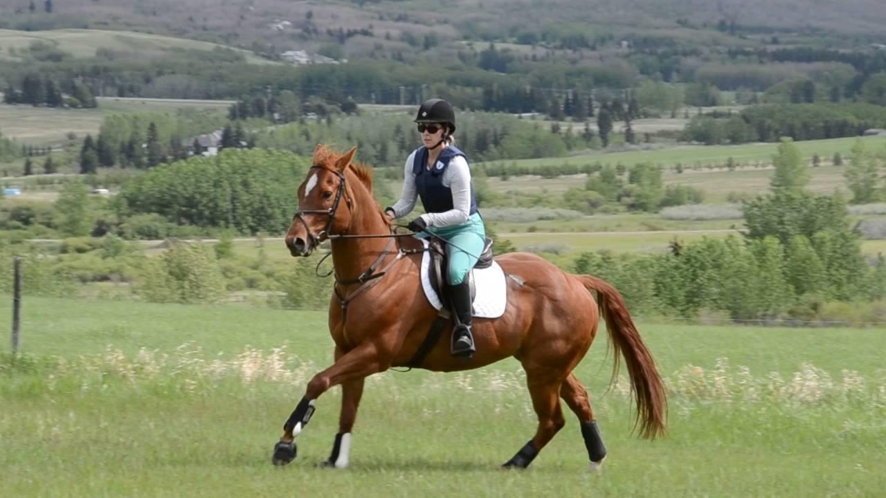 Chief at the Samantha Balogh (@Tinbarn Equestrian) Clinic Westridge Farms,  May 2016