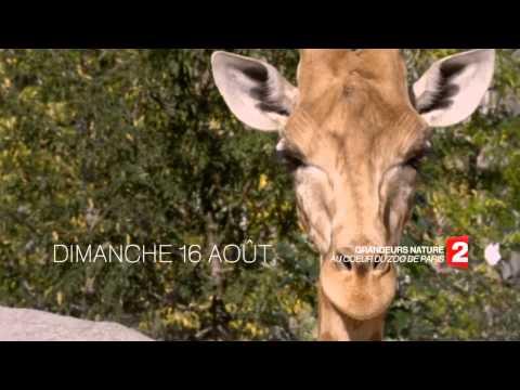Grandeurs nature : Au coeur du Zoo (Teaser │France 2)