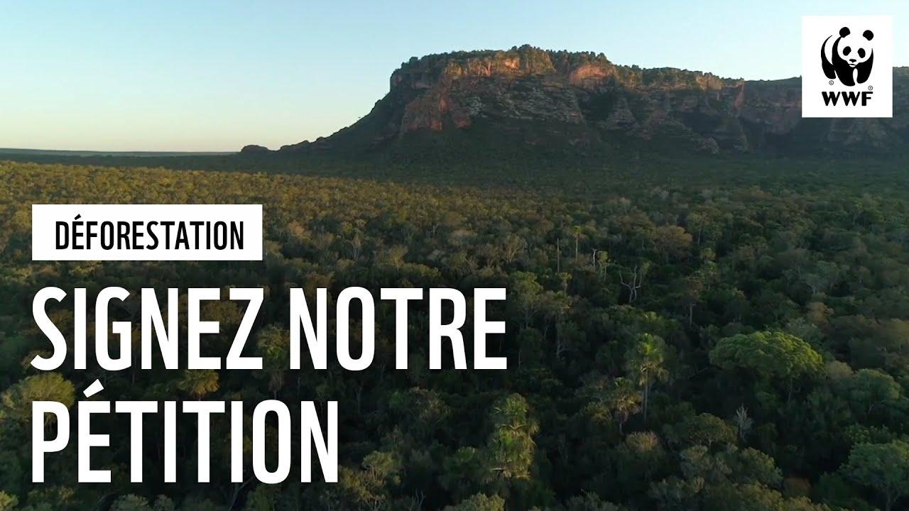 Déforestation importée : interpellons nos dirigeants