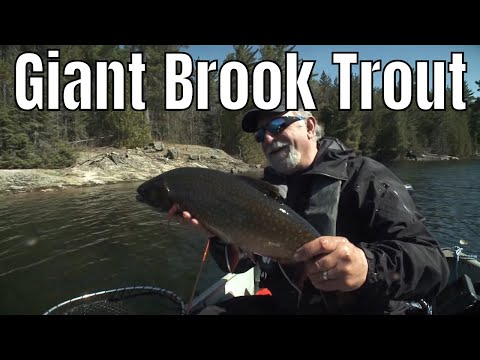 Giant Brook Trout In A Tiny Lake | Fish'n Canada