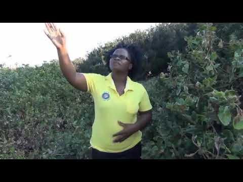 Download Sophie Ngcele - Alikho igama