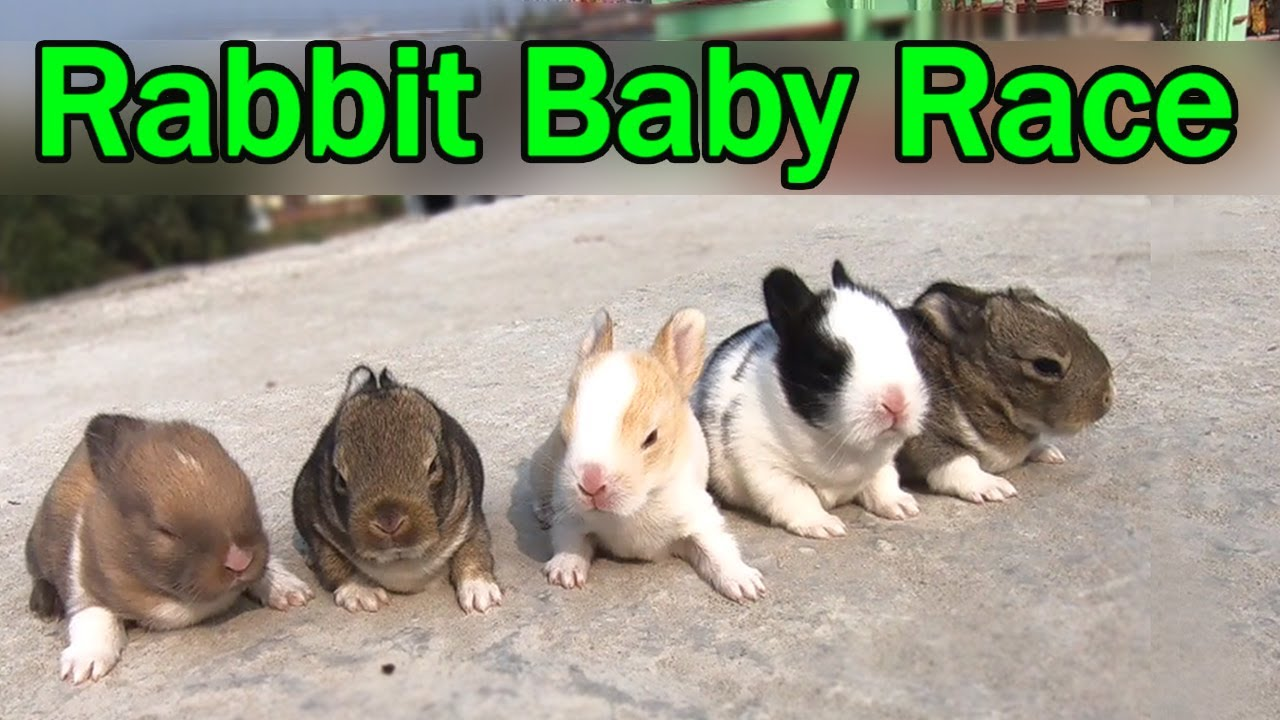 Try Not To Laugh Challenge - Funny Rabbit Baby Videos 2021