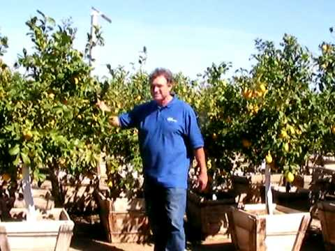 Whitfill Nursery Serving The Phoenix Valley Since 1946