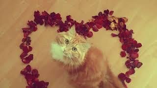 Татьянин день. Прикольные коты поздравляют Татьян. Цвет настроения снежный