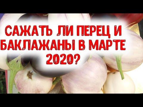 Сажать ли перец и баклажаны в марте 2020 года? Какие лучшие дни выбрать для посева семян на рассаду | календарь | горяченко | посевной | март_2020 | лунный | раиса | года | на | к
