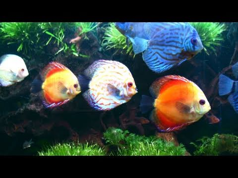 Colorful Fish Tank