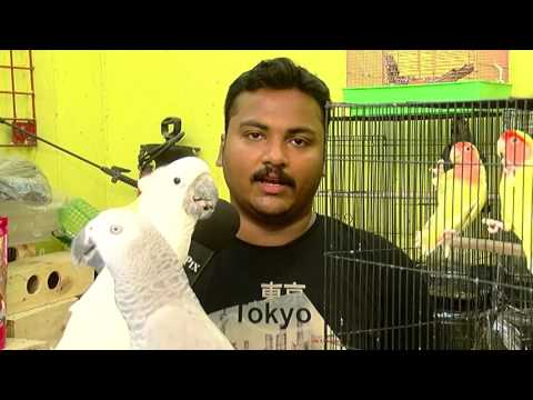 Amazing Parrot at Chennai's Pet Shop – Must Watch