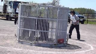 北海道犬保存会本部獣猟競技会、 若犬クラスで優勝した花鈴ちゃんです。