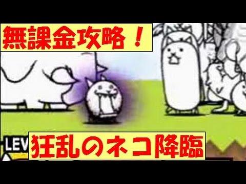 ネコ 降臨 の 狂乱