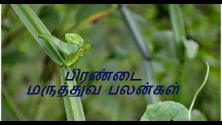 Benefits of Veld Grape in Tamil  Pirandai Payangal  Healthy Life   Tamil