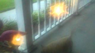 Cairn Terrier Barking During Storm 2