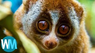 Top 10 Animals - Top 10 Adorable Animals That Can Straight-Up KILL You