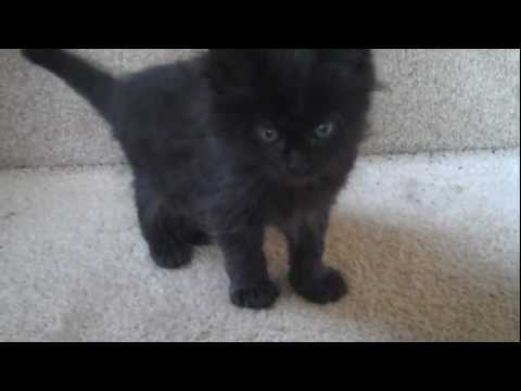Day 18: Kitten doesn't approve of me petting other kittens! :D