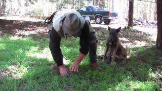 Bay Area Dog Trainer: Truffle Hunting Practice