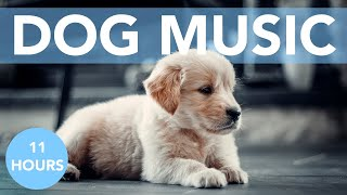 DOG MUSIC! Soft Tunes to Help Your Dog Sleep and Reduce Anxiety! NEW!