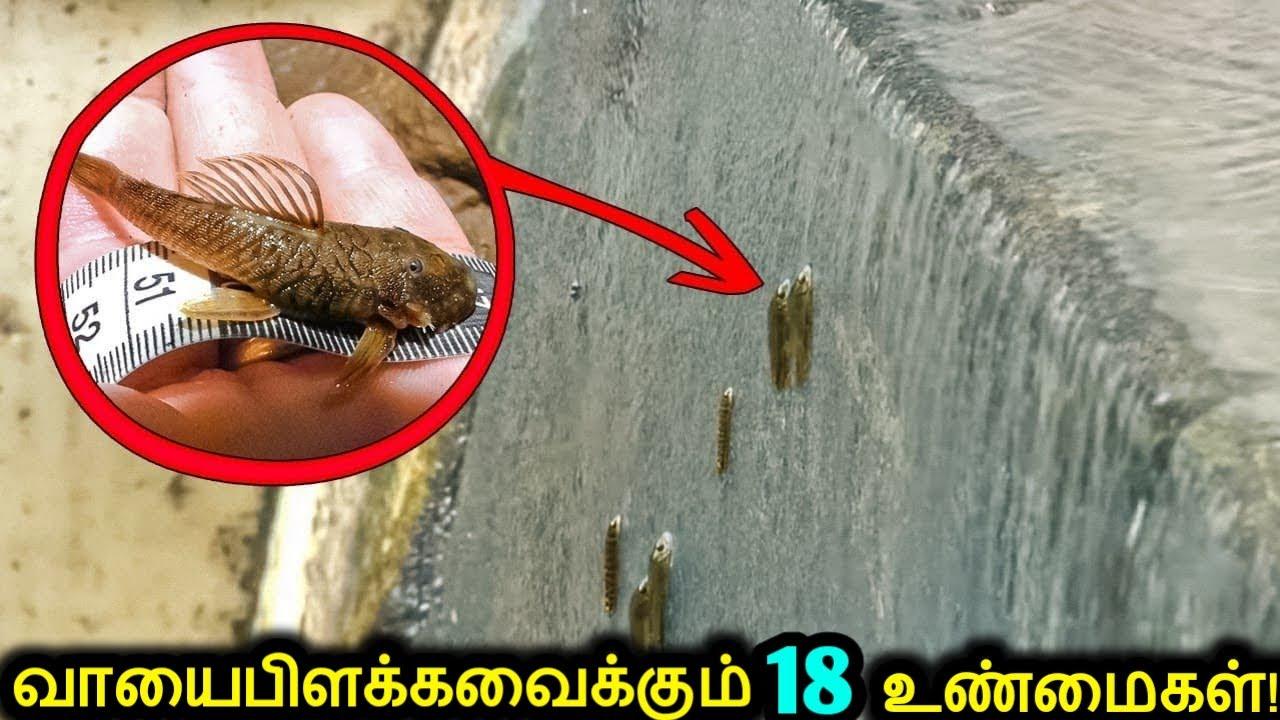 ஆச்சரியத்தை ஏற்படுத்தும் விலங்குகள் செய்யும் 18 வித்தியாசமான விஷயங்கள்! | Amazing Things Animals Do
